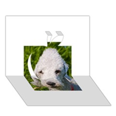 Bedlington Terrier Apple 3D Greeting Card (7x5)