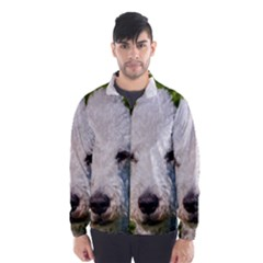 Bedlington Terrier Wind Breaker (Men)