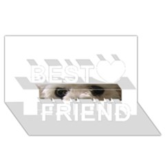 Bolognese Eyes Best Friends 3D Greeting Card (8x4)