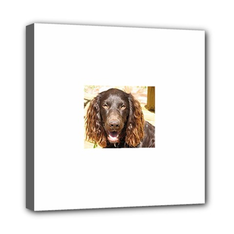 Boykin Spaniel Mini Canvas 8  x 8