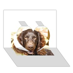 Boykin Spaniel Heart 3D Greeting Card (7x5)