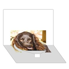 Boykin Spaniel Heart Bottom 3D Greeting Card (7x5)