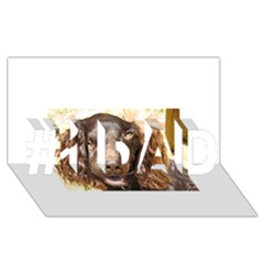 Boykin Spaniel #1 DAD 3D Greeting Card (8x4)