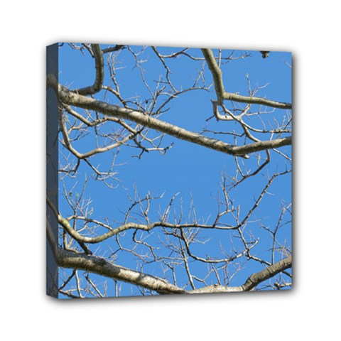Leafless Tree Branches Against Blue Sky Mini Canvas 6  x 6