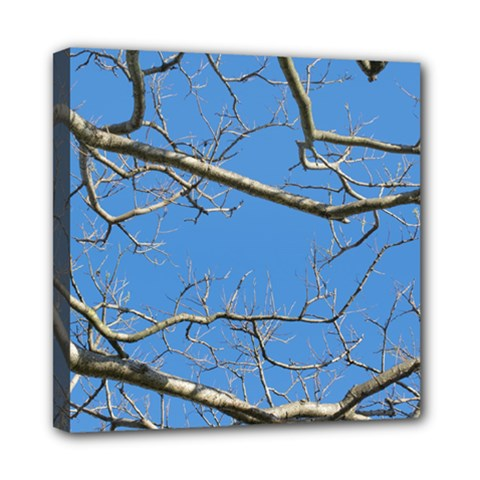 Leafless Tree Branches Against Blue Sky Mini Canvas 8  x 8