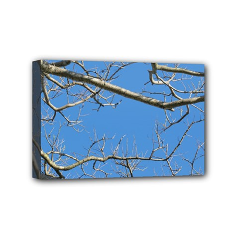 Leafless Tree Branches Against Blue Sky Mini Canvas 6  x 4