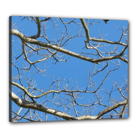 Leafless Tree Branches Against Blue Sky Canvas 24  x 20