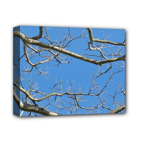 Leafless Tree Branches Against Blue Sky Deluxe Canvas 14  x 11