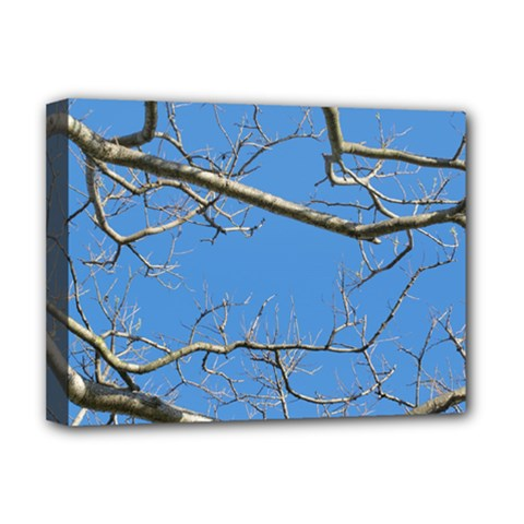Leafless Tree Branches Against Blue Sky Deluxe Canvas 16  x 12
