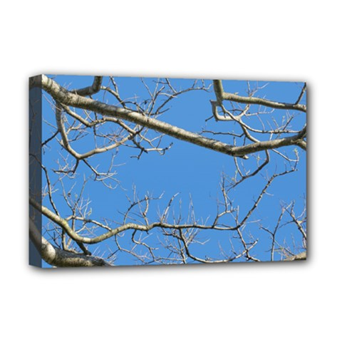 Leafless Tree Branches Against Blue Sky Deluxe Canvas 18  x 12