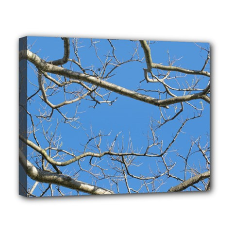 Leafless Tree Branches Against Blue Sky Deluxe Canvas 20  x 16