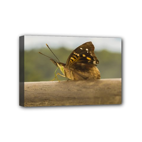 Butterfly against Blur Background at Iguazu Park Mini Canvas 6  x 4