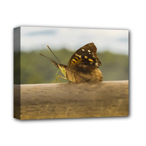 Butterfly against Blur Background at Iguazu Park Deluxe Canvas 14  x 11