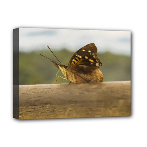 Butterfly against Blur Background at Iguazu Park Deluxe Canvas 16  x 12
