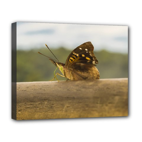 Butterfly against Blur Background at Iguazu Park Deluxe Canvas 20  x 16