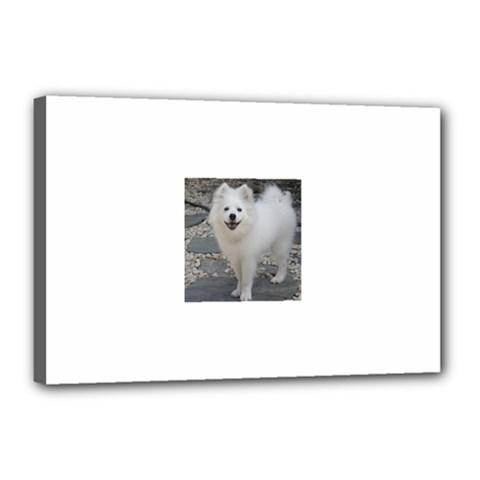 American Eskimo Dog Full Canvas 18  x 12