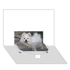 American Eskimo Dog Full Heart Bottom 3D Greeting Card (7x5)