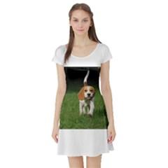 Beagle Walking Short Sleeve Skater Dresses
