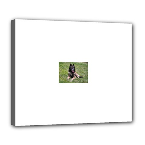 Belgian Tervuren Laying Deluxe Canvas 24  x 20
