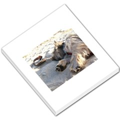 Cairn Terrier Sleeping On Beach Small Memo Pads