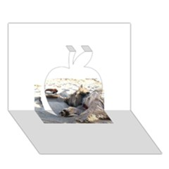 Cairn Terrier Sleeping On Beach Apple 3D Greeting Card (7x5)