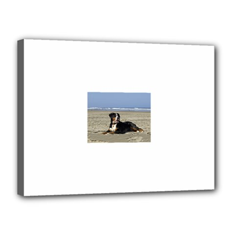 Bernese Mountain Dog Laying On Beach Canvas 16  x 12