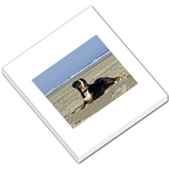 Bernese Mountain Dog Laying On Beach Small Memo Pads