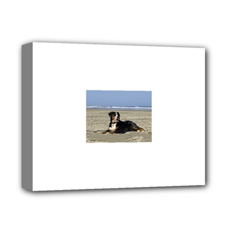 Bernese Mountain Dog Laying On Beach Deluxe Canvas 14  x 11