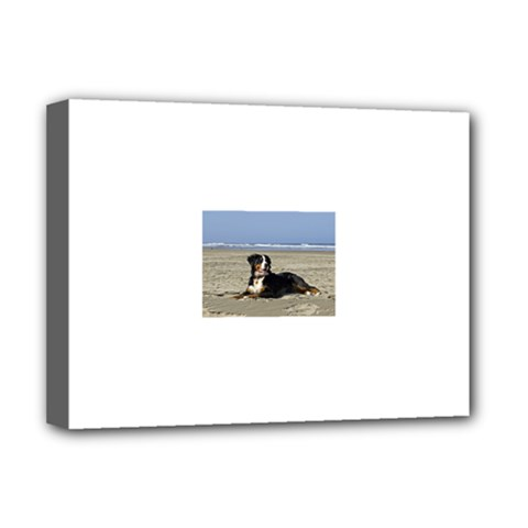 Bernese Mountain Dog Laying On Beach Deluxe Canvas 16  x 12