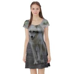 White Wolf Short Sleeve Skater Dresses