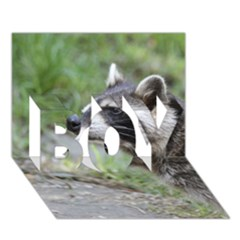 Racoon 1115 BOY 3D Greeting Card (7x5)