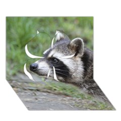 Racoon 1115 Clover 3D Greeting Card (7x5)