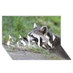 Racoon 1115 Sorry 3d Greeting Card (8x4)