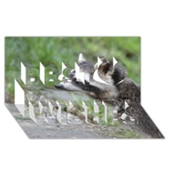 Racoon 1115 Best Wish 3D Greeting Card (8x4)