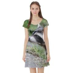 Racoon 1115 Short Sleeve Skater Dresses
