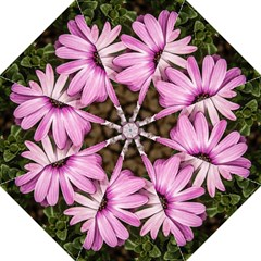 Beautiful Colourful African Daisies  Golf Umbrellas
