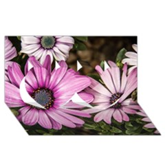 Beautiful Colourful African Daisies  Twin Hearts 3D Greeting Card (8x4)