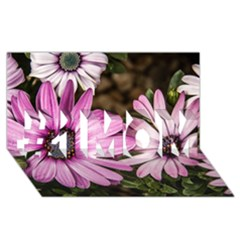 Beautiful Colourful African Daisies  #1 MOM 3D Greeting Cards (8x4)