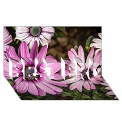 Beautiful Colourful African Daisies  BEST BRO 3D Greeting Card (8x4)