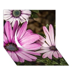 Beautiful Colourful African Daisies  Circle 3D Greeting Card (7x5)