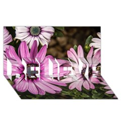 Beautiful Colourful African Daisies  Believe 3d Greeting Card (8x4)