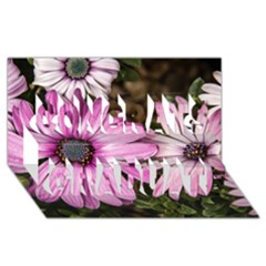 Beautiful Colourful African Daisies  Congrats Graduate 3d Greeting Card (8x4)