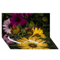 Beautiful Colourful African Daisies  Twin Heart Bottom 3D Greeting Card (8x4)