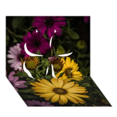 Beautiful Colourful African Daisies  Clover 3D Greeting Card (7x5)