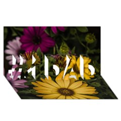 Beautiful Colourful African Daisies  #1 DAD 3D Greeting Card (8x4)