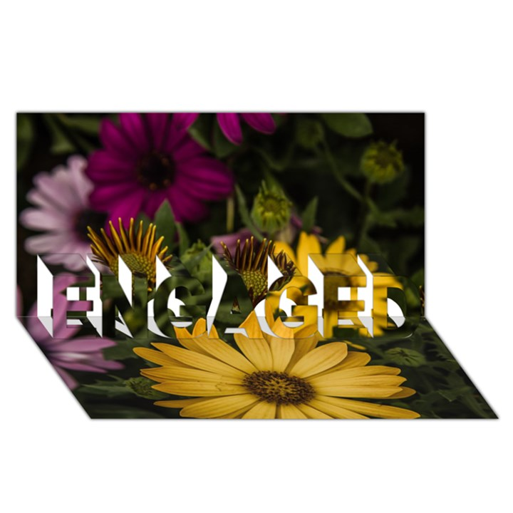 Beautiful Colourful African Daisies  ENGAGED 3D Greeting Card (8x4)