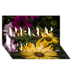 Beautiful Colourful African Daisies  Merry Xmas 3D Greeting Card (8x4)