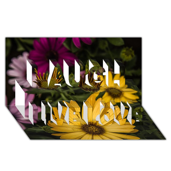 Beautiful Colourful African Daisies  Laugh Live Love 3D Greeting Card (8x4)