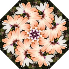 Beautiful Colourful African Daisies Straight Umbrellas