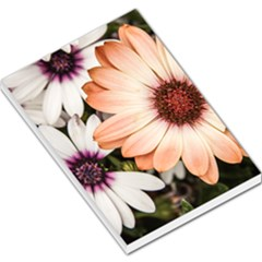 Beautiful Colourful African Daisies Large Memo Pads